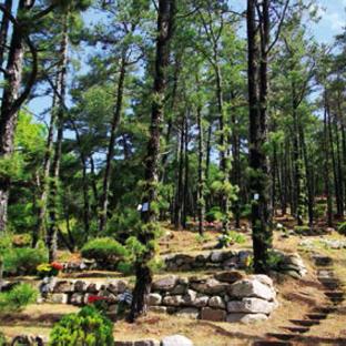 자연수목장